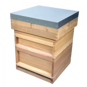 National Hive - CEDAR